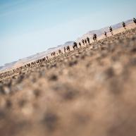 MDS2016 - Coureurs dans le desert